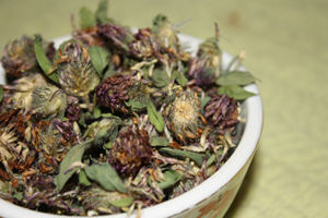 Red Clover Dried Flowers Anti Cancer photo