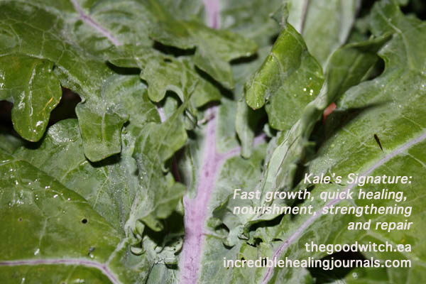 Kale Face and the Doctrine of Signatures