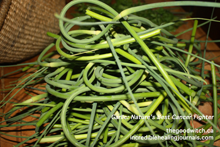 Garlic Scape and Basil Pesto | Lisa Robbins Holistic ...